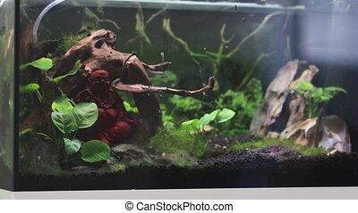 sale, bouddha, statue, aquarium., intérieur, aquarium