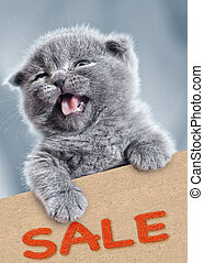 sale!, divertido, gatito, con, vacío, cardboard., mascota, retrato
