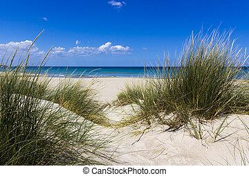 Salento, sand dunes - Salento Lecce: the sea, the beach and ...