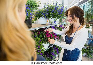 salesgirl, ausstellung, blume, pflanze, zu, kunde, in, laden