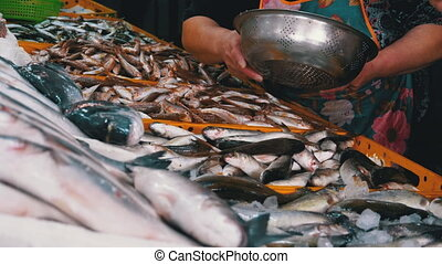 Saleswoman Sells Fresh Fish at a Street Fish Market. Marine Fish in Ice Sold on the Showcase of Seafood Shop. Consumer Market. Counter with Variety Fresh catch of Sea fish. Close-up. Batumi, Georgia. 4K