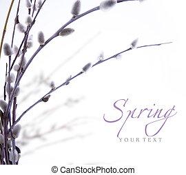 salgueiro, primavera, florescendo, arte, ramos