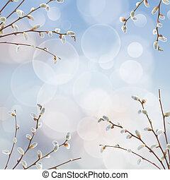 salgueiro, ramos, com, catkins, quadro