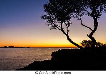 salida del sol, con, árboles