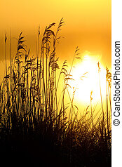 salida del sol, con, mañana, rocío, en, un, lago