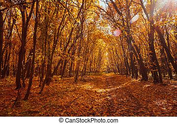 salida del sol, en, bosque de otoño