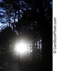 salida del sol, en, el, invierno, bosque, por, mañana temprana