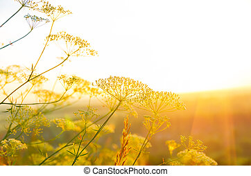 salida del sol, en, el, verano