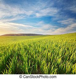 salida del sol, en, grean, meadow.