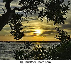 salida del sol, en, isla de sanibel