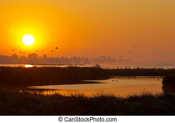 salida del sol, en, lago, con, vuelo, aves