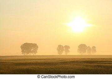 salida del sol, encima, el, campo