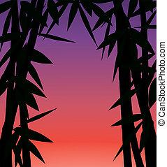 salida del sol, o, ocaso, en, bosque de bambú
