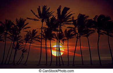 salida del sol, silueta, de, alto, árboles de palma