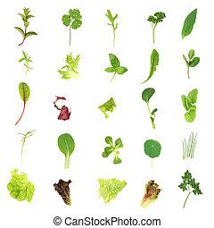 sallad, grönsallat, och, ört, bladen