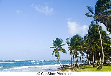 Sally Peaches Beach Big Corn Island Nicaragua Central...
