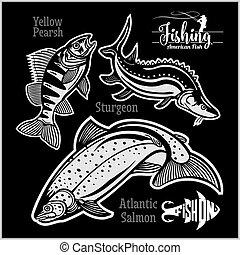 salmão, amarela, esturjão, atlântico, isolado, pearsh, eua...