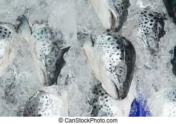 salmón fresco, en, hielo