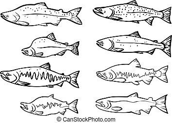 salmón, peces