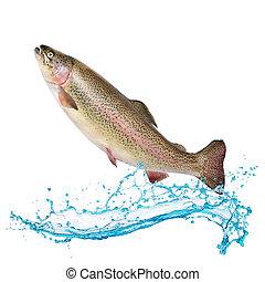 salmón, pez, saltar, afuera, de, agua