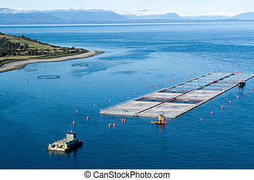 salmon cages on islands in southern Chile - aerial view of...