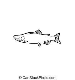 Salmon - Vector illustration : Salmon on a white background.