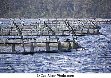 Salmon Farming - Floating nets of a salmon farm in a natural...