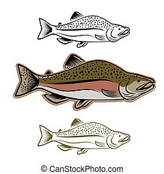 salmon fish illustration set