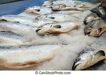 Salmon fish   - Salmon fish at the market for sell