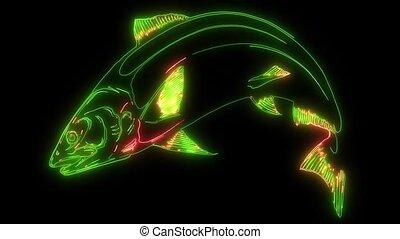salmon fish video animation laser - salmon fish animal video...