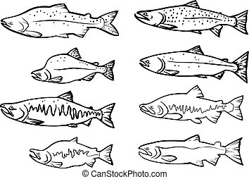 Salmon fishes - vector set: salmon fishes