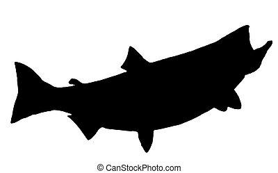 salmon, koning, silhouette