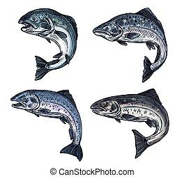 Salmon sketch fish, fishing catch icon