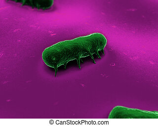 salmonella bacteria - 3d rendered close up of some isolated...