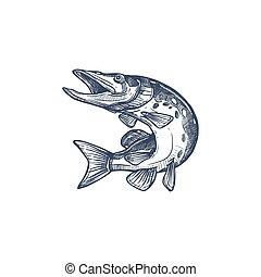 salmonidae, atlantisch, ikone, ray-finned, lachs, fische