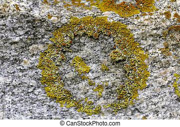 salo, xanthoria, 2011., parete, modello, finlandia, giallo, wall., perni?, ottobre, lichene, parietina, granito, fotografato, fabbricazione