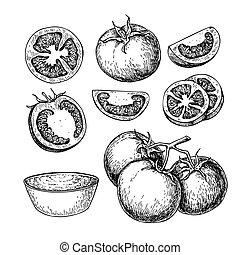 salsa, tomate, vector, dibujo, aislado, cortar, set., tomate...