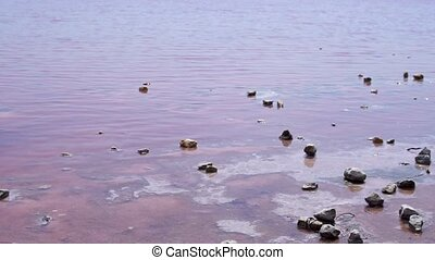 Salt lake pink in the Crimea natural with stones, in the ...