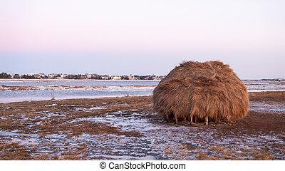 Salt marsh haystack - Newbury Salt Marsh was dotted with...