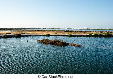 Salt marsh - Mediterranean salt marsh early morning, Santa...