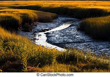 Salt marsh - Beautiful view of a salt marsh at low tide in...