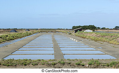 salt marsh in the ile de re, France