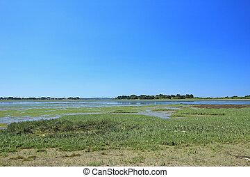 Salt marsh with Salicornia, Atlantic Ocean, France - Salt...