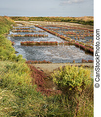 Salt marshes of Guerande on a sunny day in summer