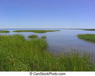 salt marshes on Cape Cod