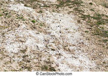 salt on the ground in nature