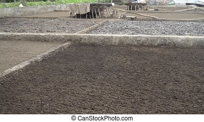Salt production in Bali. - Production of sea salt in the...