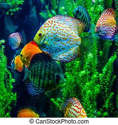 salt water fish in the ocean or aquarium