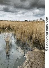 Salt water reed bed on a cloudy morning