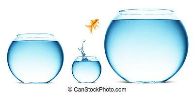 saltar, agua, afuera, goldfish